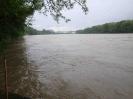 Der Rhein bei Hochwasser_3